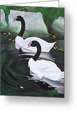 Black Necked Swans Greeting Card
