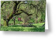 Black Oak And Creek Greeting Card