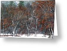 Black Oaks In Snowstorm Yosemite National Park Greeting Card