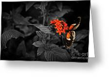 Black-orange Butterfly Greeting Card