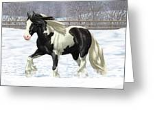 Black Pinto Gypsy Vanner In Snow Greeting Card by Crista Forest