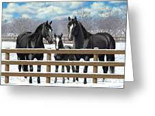 Black Quarter Horses In Snow Greeting Card by Crista Forest