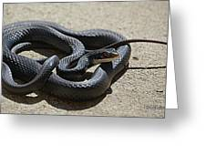 Black Racer Greeting Card