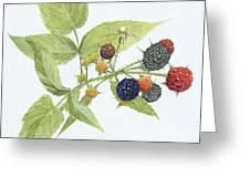 Black Raspberries Greeting Card by Scott Bennett