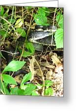 Black Rat Snake Greeting Card