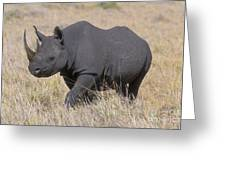 Black Rhino On The Masai Mara Greeting Card