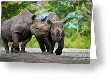 Black Rhinoceroses Greeting Card