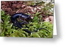 Black Salamander Greeting Card