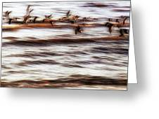 Black Skimmers Of Long Beach - Mississippi - Birds Greeting Card