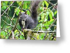 Black Squirrel In The Cherry Tree Greeting Card
