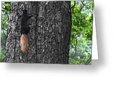 Black Squirrel With Blond Tail Two  Greeting Card