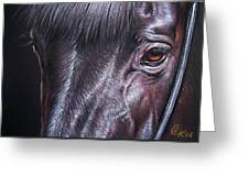 Black Stallion Greeting Card