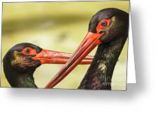Black Storks Jerez De La Frontera Spain Greeting Card