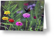 Black Swallowtail Butterfly In August  Greeting Card