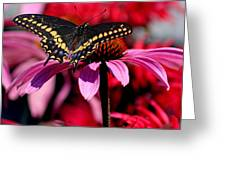 Black Swallowtail Butterfly On Coneflower Square Greeting Card