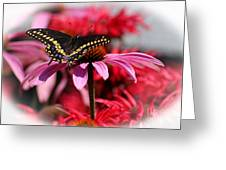 Black Swallowtail Butterfly With Coneflower And Monarda Greeting Card