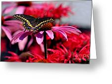 Black Swallowtail Butterfly With Coneflowers And Bee Balm Greeting Card