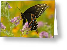 Black Swallowtail Greeting Card by Robert Frederick