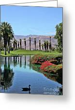 Black Swan In Palm Springs Greeting Card