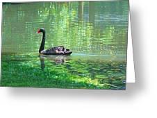 Black Swan Swim In A Pond Greeting Card