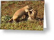 Black-tailed Prairie Dogs Wrestling Around Greeting Card