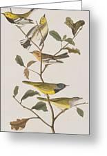 Black Throated Green Warbler Blackburnian Mourning Warbler Greeting Card