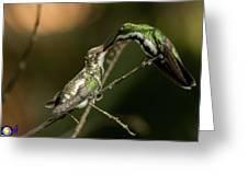 Black-throated Mango With Her Baby Hummingbird. Greeting Card