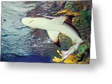 Black Tipped Reef Shark-1 Greeting Card