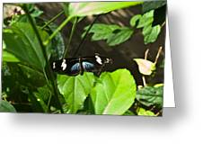 Black Tropical Butterfly Greeting Card