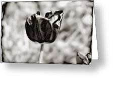 Black Tulip Greeting Card