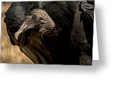Black Vulture 2 Greeting Card