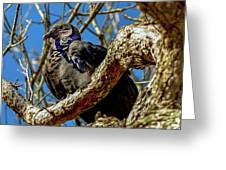 Black Vulture Greeting Card