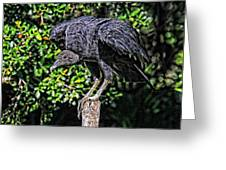 Black Vulture On A Fence Post Greeting Card