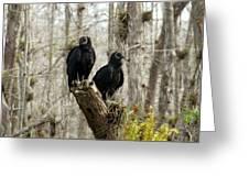 Black Vultures Greeting Card