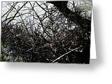 Black Walnut Spikes II Greeting Card