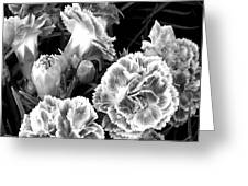 Black White View  Greeting Card