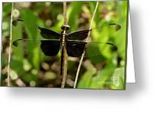 Widow Skimmer Dragonfly Female Greeting Card