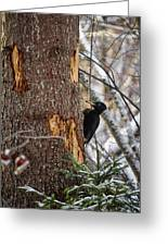 Black Woodpecker Peek Greeting Card