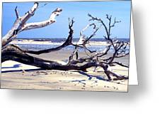 Blackbeard Island Beach Greeting Card by Thomas R Fletcher