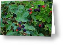 Blackberries 1 Greeting Card