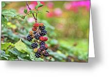 Blackberry. Greeting Card