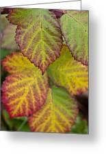 Blackberry Autumn Greeting Card