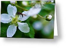 Blackberry Bzzzzz Greeting Card