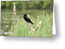 Blackbird Fly Greeting Card