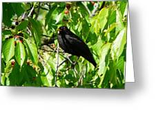 Blackbird In The Cherry Tree Greeting Card