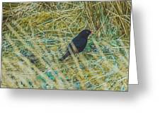 Blackbird In The Undergrowth Greeting Card
