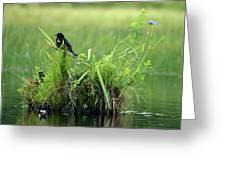 Blackbird Island Greeting Card