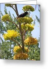 Blackbird Singing Greeting Card