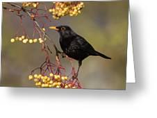Blackbird Yellow Berries Greeting Card