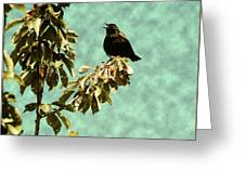 Blackbird's Song Greeting Card